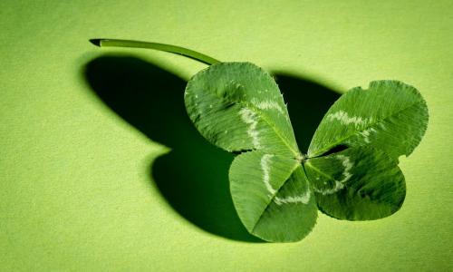 Как привлечь к себе удачу: что обязательно должно быть в доме