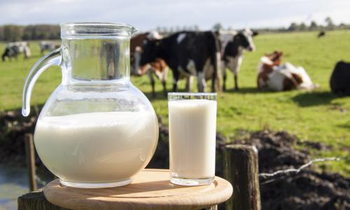 Учёные выяснили, что молоко продлевает жизнь