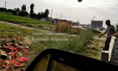 Одной ногой в Европе. Почему фермеры Украины уничтожают арбузы?
